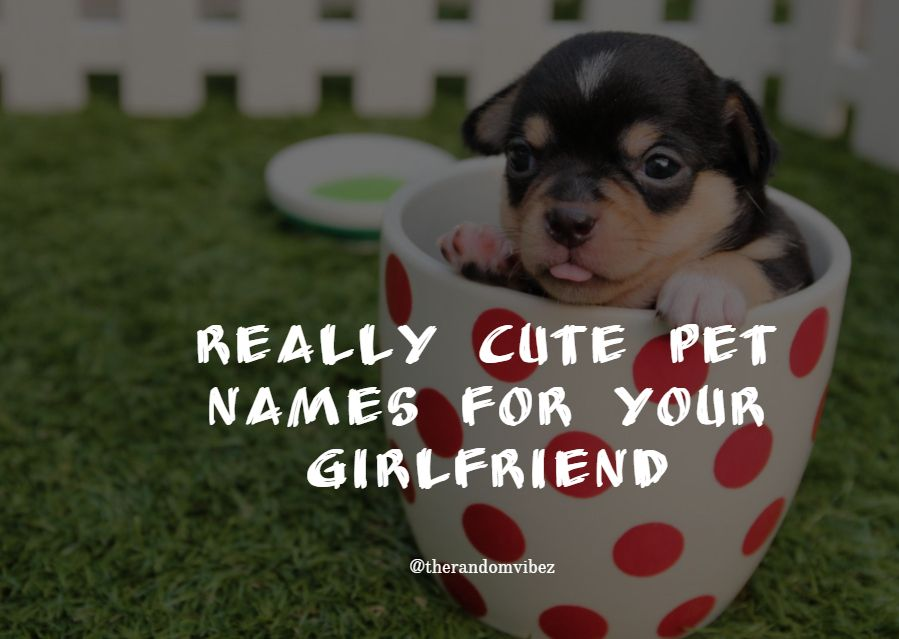 490+ Most Romantic and Cute Nicknames for Your Girlfriend