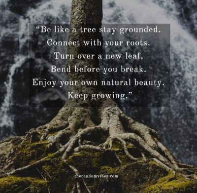 Strong Roots Quotes Images