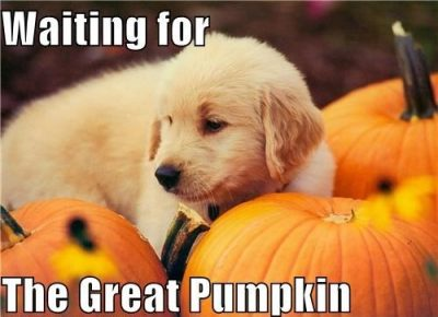 Funny Halloween And Pumpkin Images
