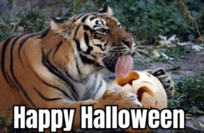 Happy Halloween Animal Meme