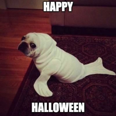 Happy Halloween Dog Meme Picture