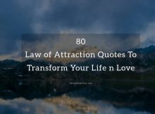 Top Law of Attraction Quotes