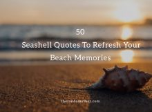 50 Seashell Quotes To Refresh Your Beach Memories