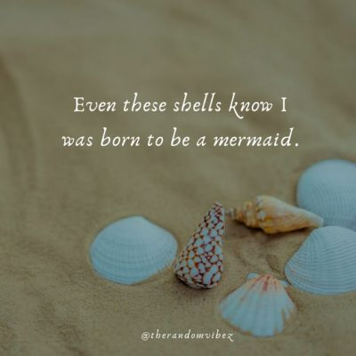 Famous Quotes About Seashells