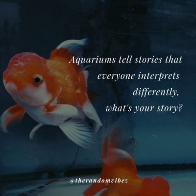 Quotes For Aquarium