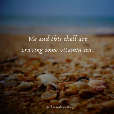Seashell Funny Quotes