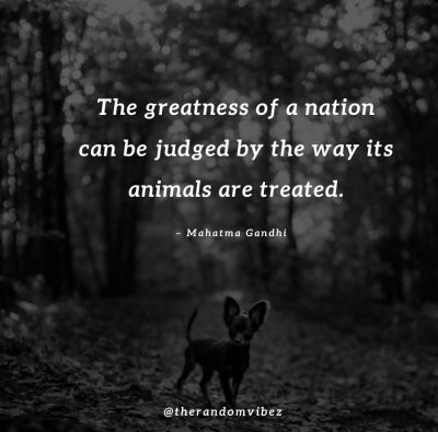 Animals Quotes Inspirational